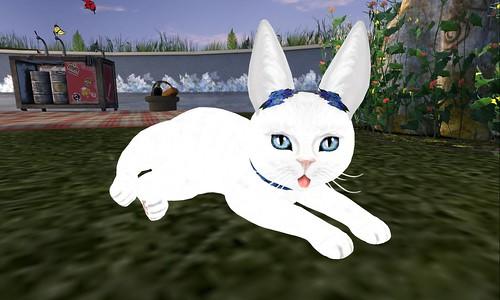 Bunny Russian White Opaline