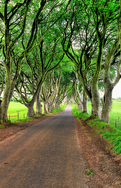 Bregagh Road NIR - Dark Hedges 06