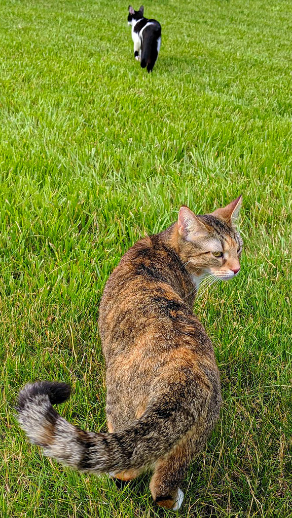 Spice is in the foreground, looking back, while Smudge is in the distance, wandering toward the treeline.