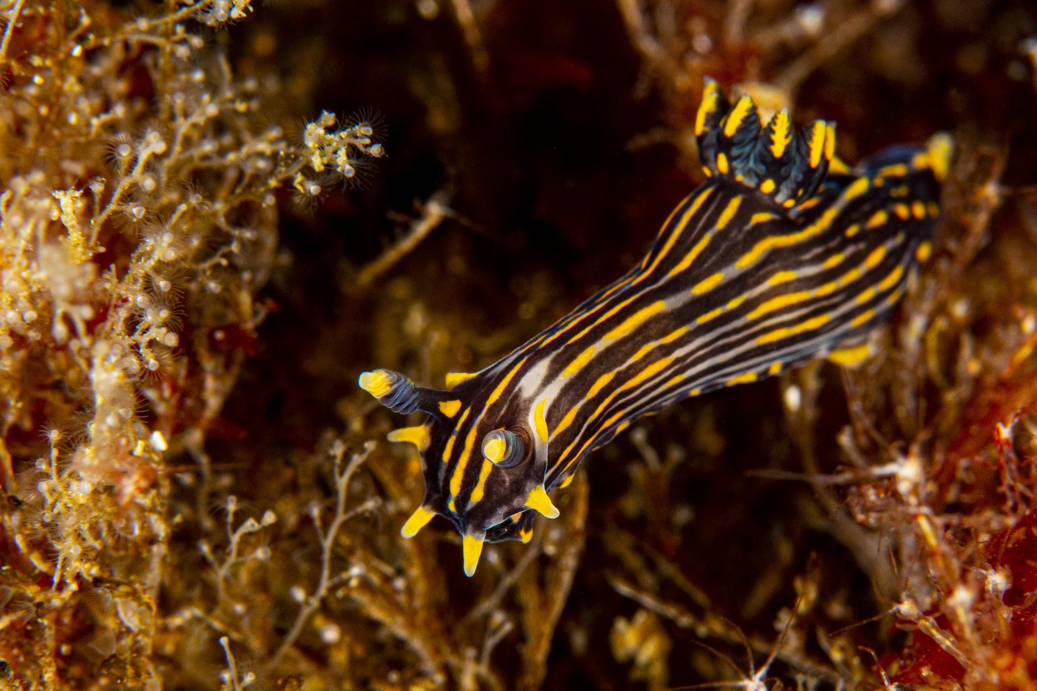 nudibranch12May24-19