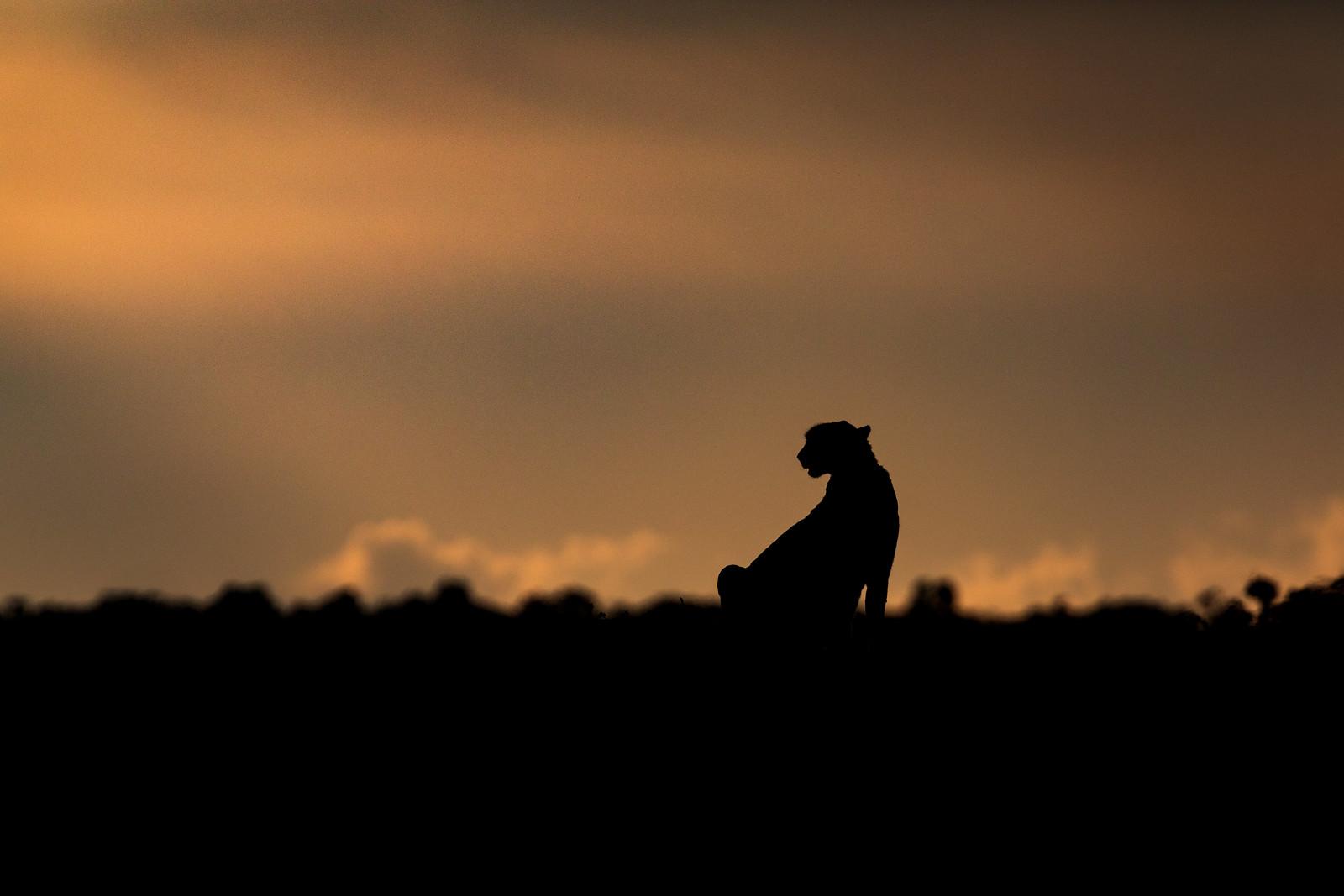 Kisaru in Silhouette