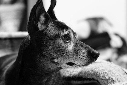 essence of dog | by the adapted eye