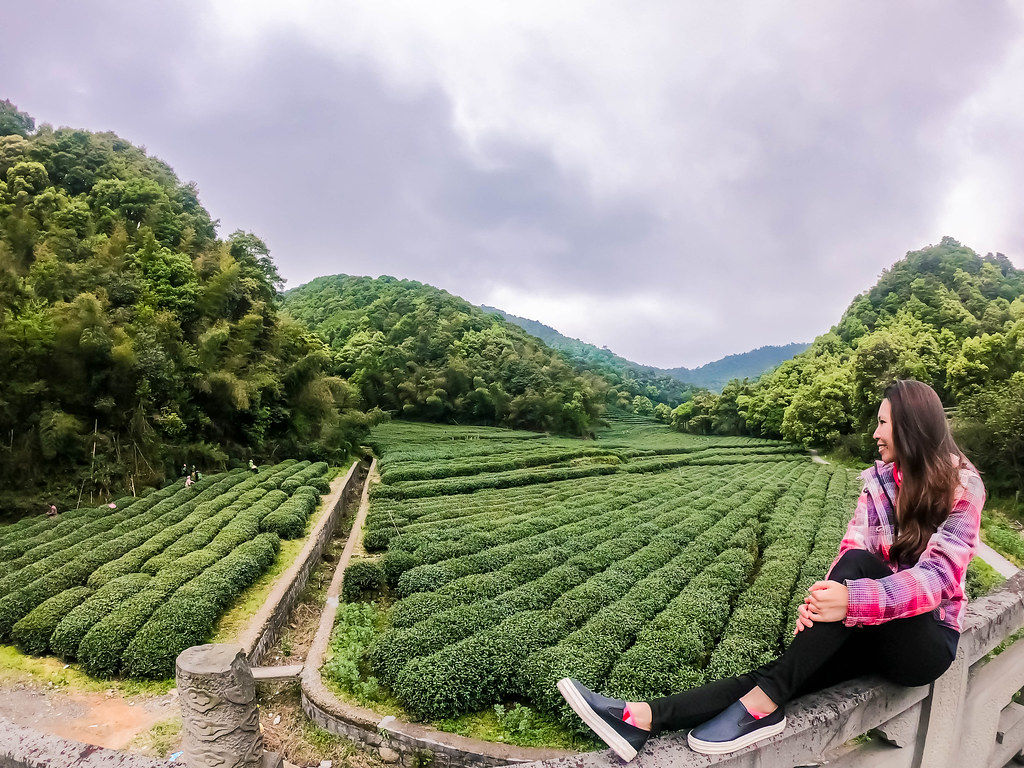 longjing tea picking experience