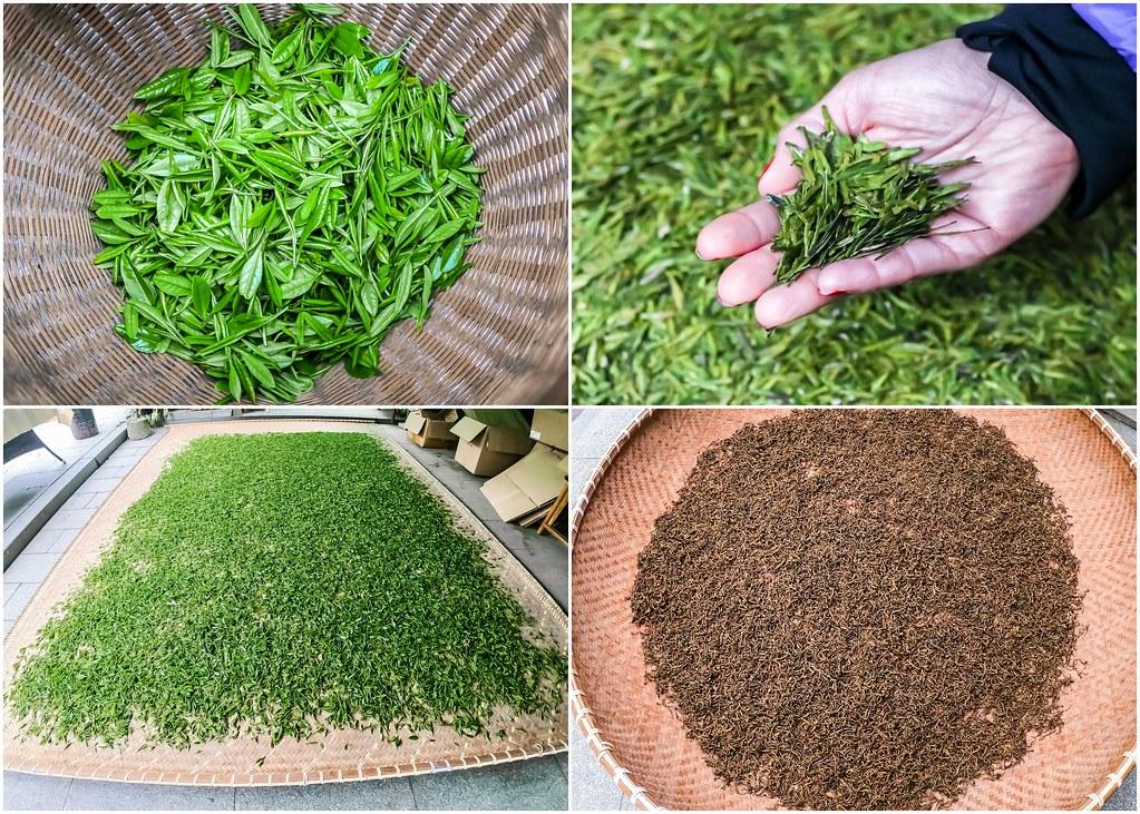 tea-picking-hangzhou-alexisjetsets