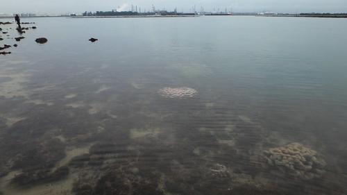 Living reefs of Terumbu Bemban, Jun 2019