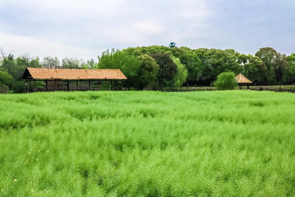wuzhen-water-town-alexisjetsets-30