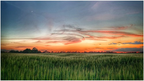 sunlit sunlight sunset clouds cloud cirrus sky skywatching weather weatherwatch farmland farming fields agriculture countryside northlincolnshire northlincs lincolnshire nlincs scunthorpe crops outdoors outside nature naturephotography naturelovers natureseekers photography photoof moon horizon trees