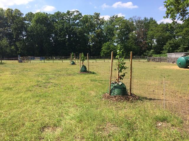 Bewässerungstaschen für die neuen Obstbäume