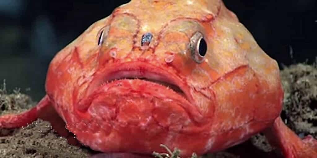 coffinfish-retient-son-souffle