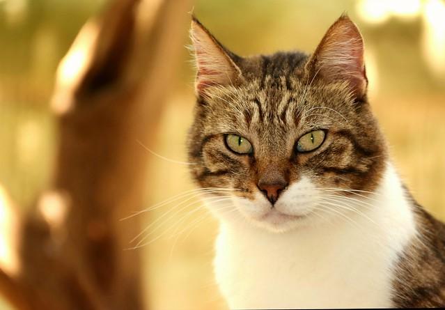 cat III