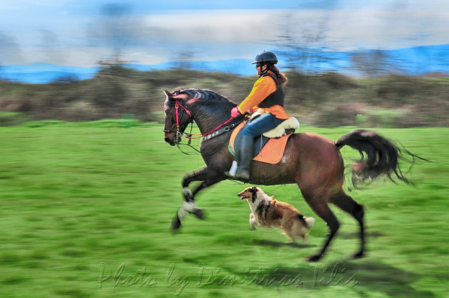 Double gallop panning