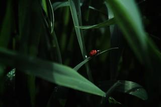 A ladybug.