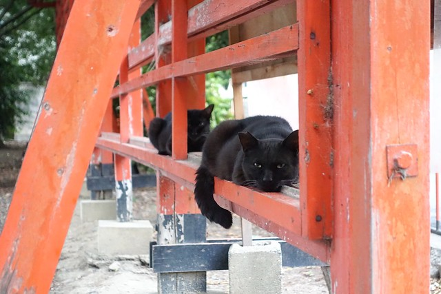 Today's Cat@2019-06-07