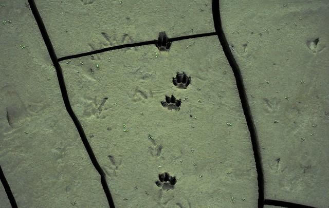Dry River Floor