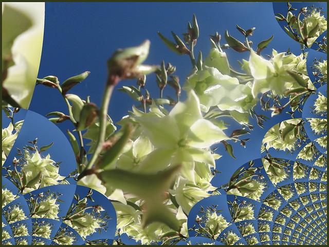 Sommerwind 💦wünsche Euch allen fröhliche Pfingstfeiertage😊- Palmlilie aus meinem Garten mit Gimp erstellt 💙