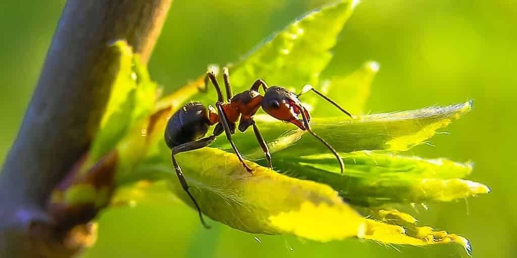 des-fourmis-qui-aident-des-partenaires