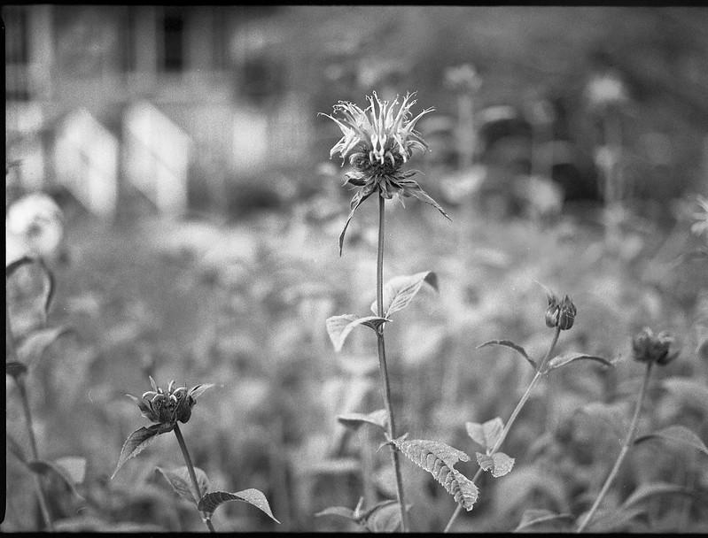 floral forms, residence, front railings, neighborhood,  Asheville, NC, Mamiya 645 Pro, mamiya sekor 45mm f-2.8, Bergger Pancro 400, HC-110 developer, 6.6.19