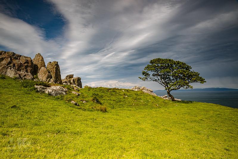 20190607-2019, Baum, Game of Thrones Drehort, Glens of Antrim, Irland-020.jpg
