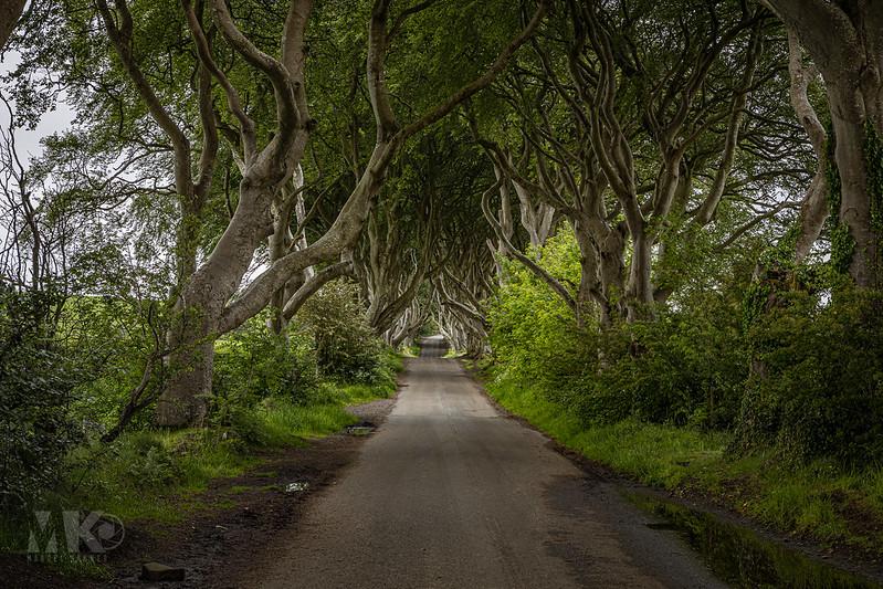 20190607-2019, Dark Hedges, Game of Thrones Drehort, Irland, Nordirland-027.jpg