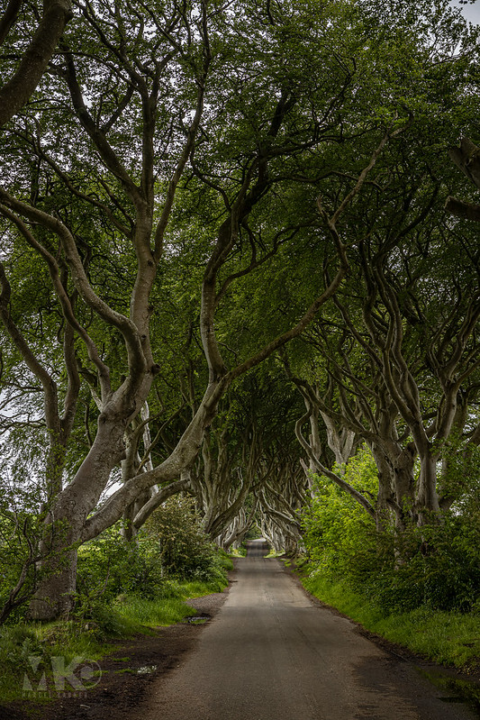 20190607-2019, Dark Hedges, Game of Thrones Drehort, Irland, Nordirland-026.jpg