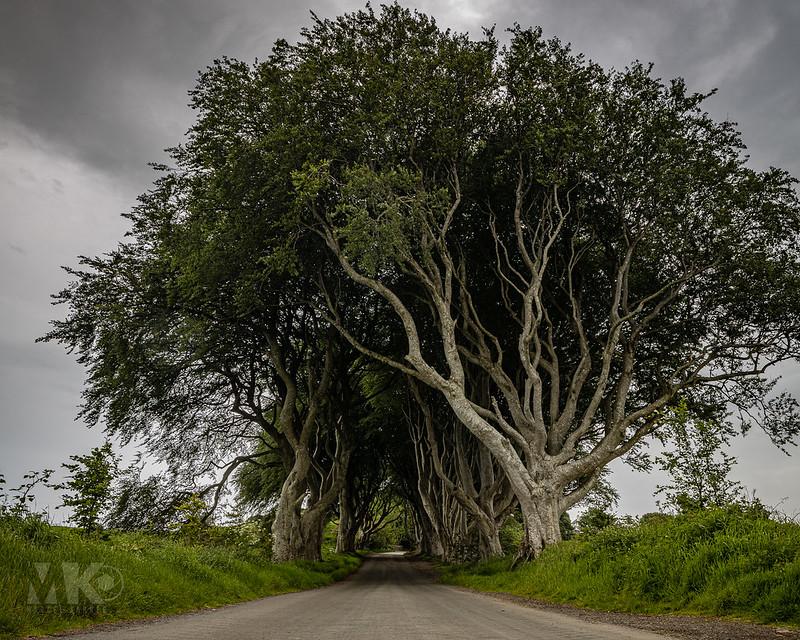 20190607-2019, Dark Hedges, Game of Thrones Drehort, Irland, Nordirland-029.jpg