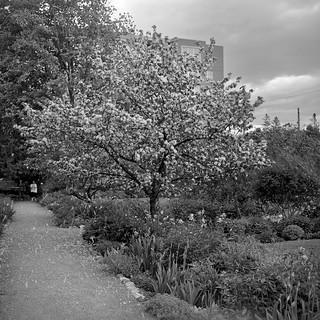 Maplelawn Garden, Ottawa