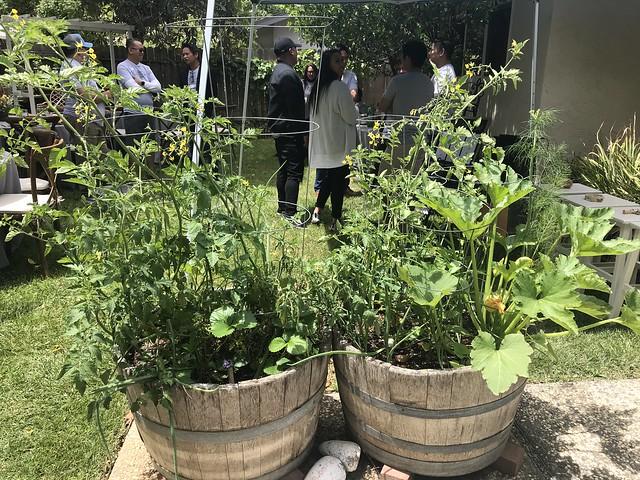 Tan Family Reunion - garden plants