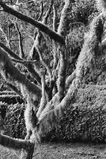 Elk Rock Garden, Portland, OR