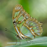 Fr, 31.05.19 - 12:36 - Papillorama Kerzers