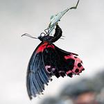 Fr, 31.05.19 - 12:31 - Papillorama Kerzers
