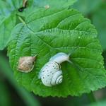 Fr, 31.05.19 - 07:59 - Fruticicola fruticum