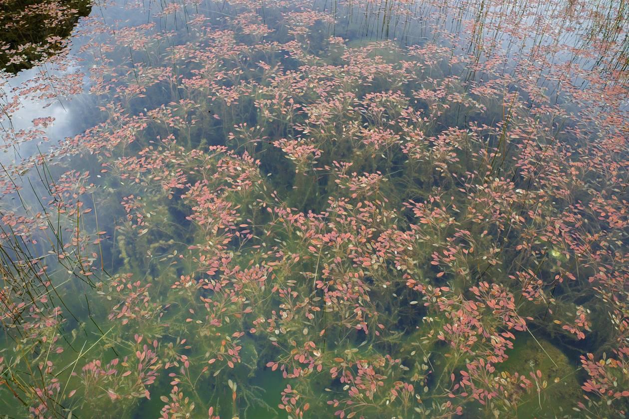 レッドターントラック 赤い池(赤い草)