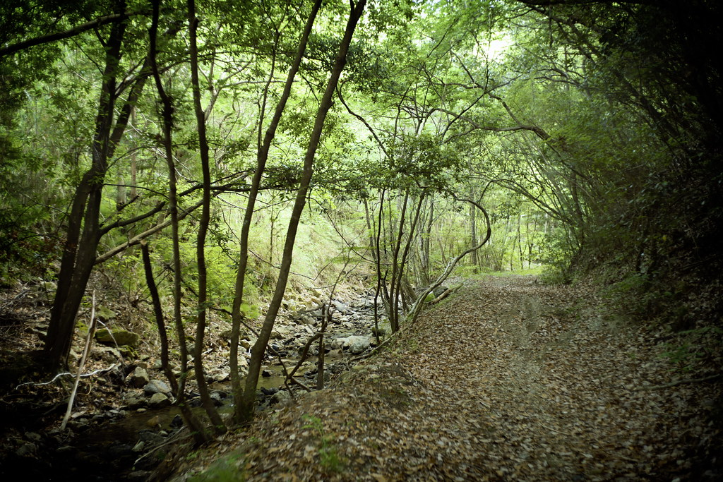 walk along a stream