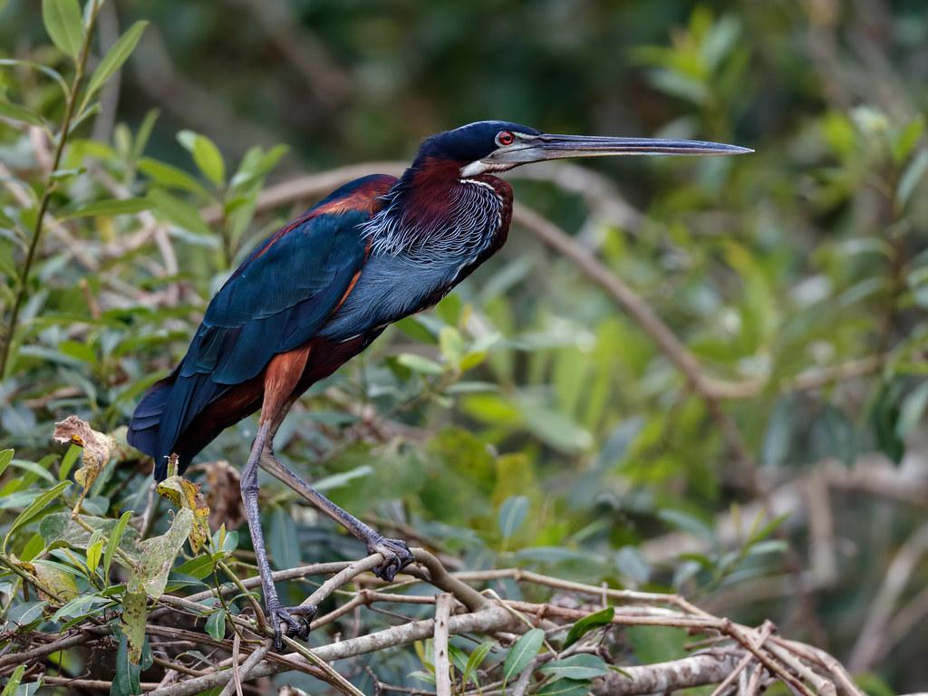 Pantanal_3697
