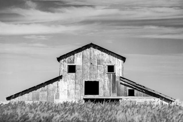 Barn behind wheat