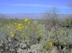 Saguaro National Park East 30 March  - 11