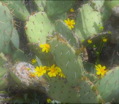 Saguaro National Park East 30 March  - 1