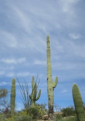 Saguaro National Park East 30 March  - 5