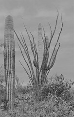 Saguaro National Park East 30 March  - 7