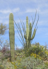 Saguaro National Park East 30 March  - 8
