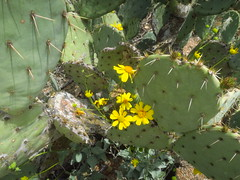 Saguaro National Park East 30 March  - 2