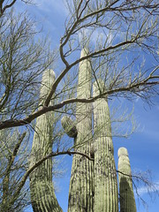 Saguaro National Park East 30 March  - 12