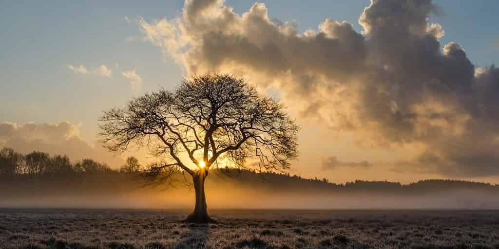 Les arbres qui deviennent femelles vivent moins longtemps