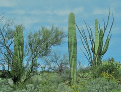 Saguaro National Park East 30 March  - 6
