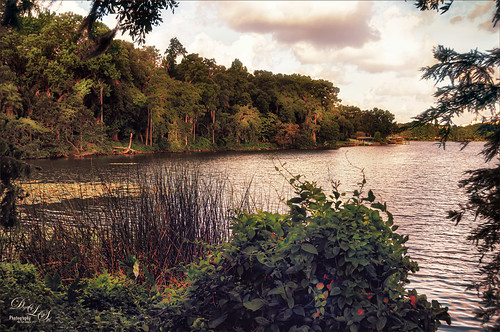 Image of Lake Rowena at the Harry P. Leu Gardens in Orlando, Florida