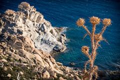 Ikaria/Ικαρία - Ikarian beauties (1)