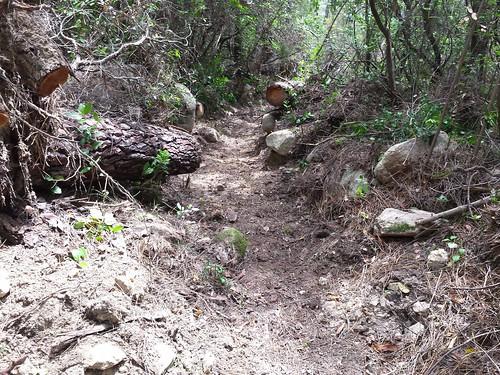 A la descente : dans la boucle 2, chemin nettoyé et ratissé