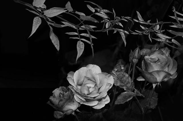 Rose e gelsomino