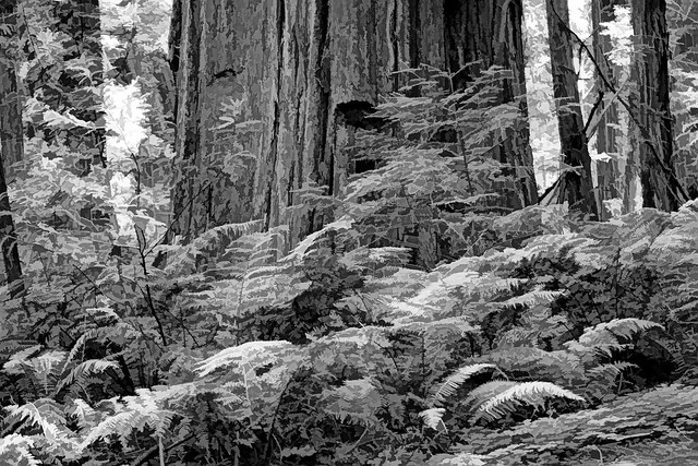 A grove of giant redwood or sequoias should be kept just as we keep a great and beautiful cathedral.~ Theodore Roosevelt