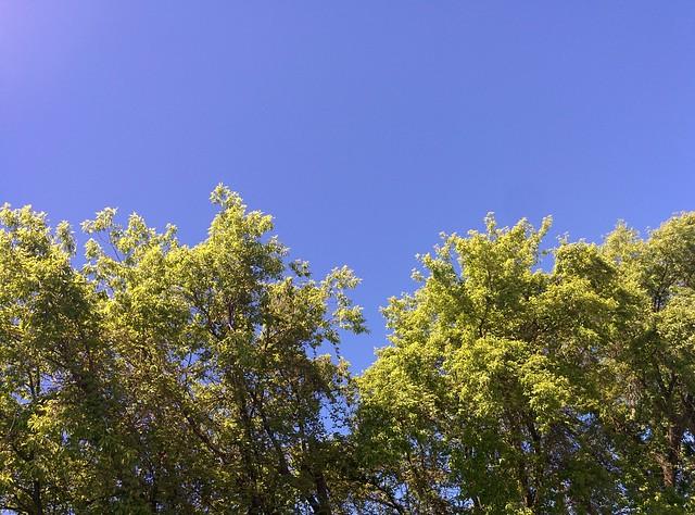 Blue into green #toronto #wallaceemerson #dupontstreet #blue #sky #green #trees #dlws